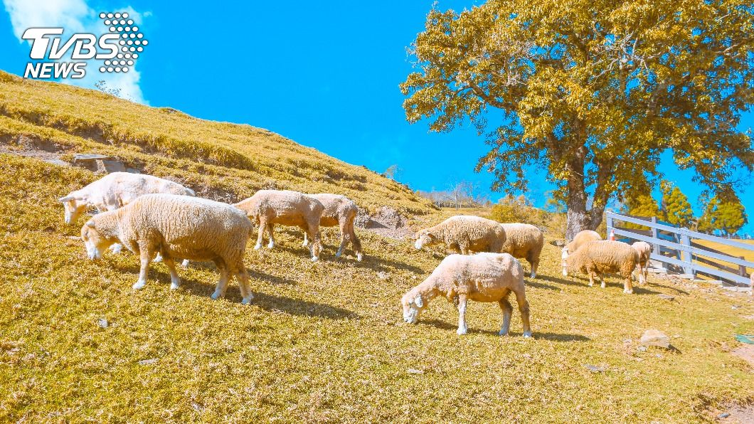 (示意圖/Shutterstock達志影像) 留言「趕X羊、草X擺」挨告 他瞎辯清境都有被法官打臉