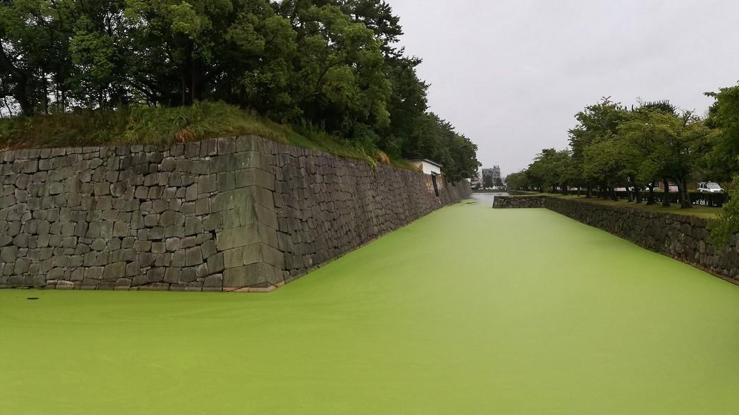 (圖/翻攝自永太郎(ながたろう)Twitter) 日本400年護城河成「抹茶牛奶」 居民驚:從未見過!