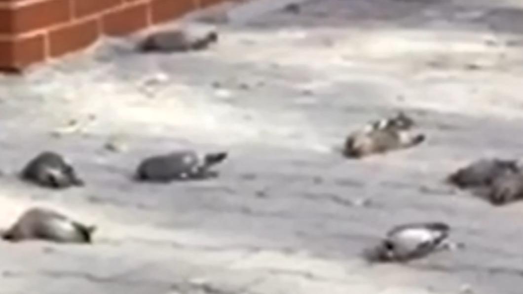 大樓旁數十隻鳥「離奇死亡」。(圖/翻攝自北京時間) 數十隻鳥「離奇死亡」大樓成墓地 專家曝元凶