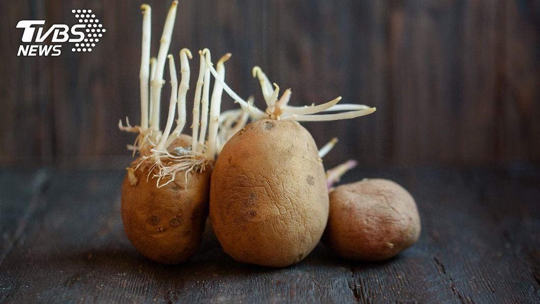 馬鈴薯發芽千萬不能吃。(示意圖/shutterstock達志影像) 買馬鈴薯最怕遇發芽 專家曝保存妙招:口感更加分