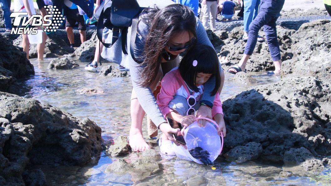 養護東海岸珊瑚礁生態 台東放流萬餘尾魚苗