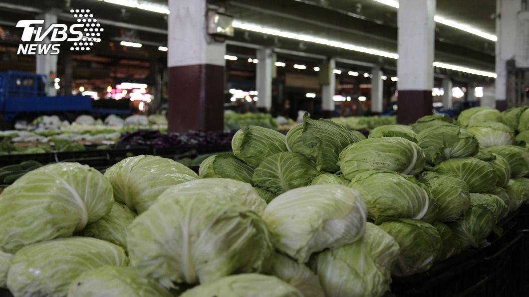 高麗菜近日生產過量。(圖/中央社) 高麗菜18日差點跌破監控價 靠開學拓銷量救急