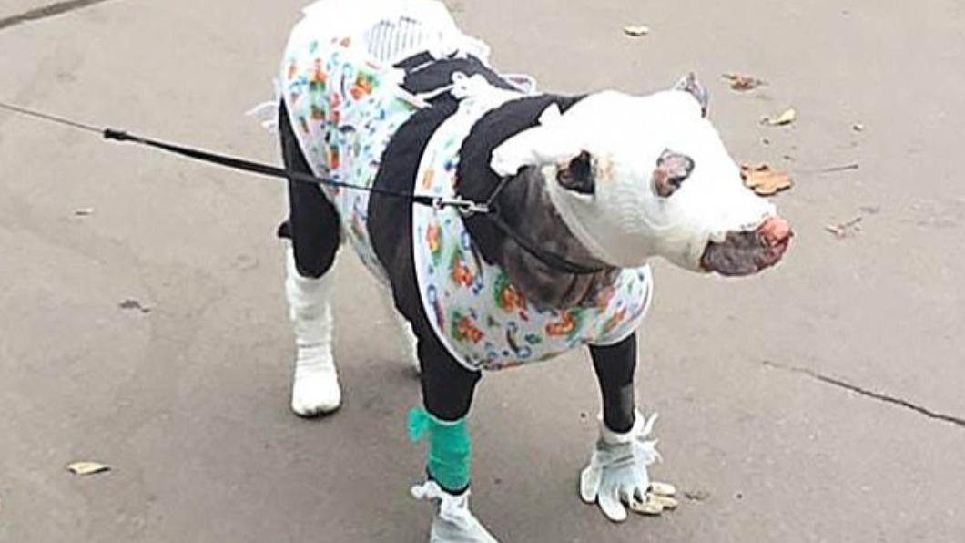 英雄狗「挺大肚」衝火場救4命 自己滿身傷倒地