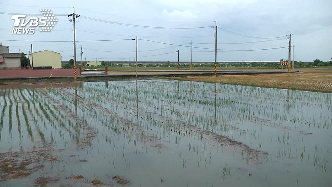 水情吃緊! 嘉南平原明年一期稻作停灌