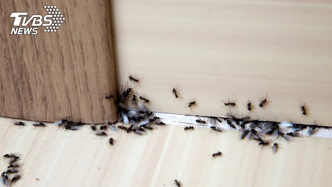 女子放火燒蟻窩慘死。(示意圖/shutterstock達志影像) 縱火燒蟻窩遭「著火螞蟻」爬滿腿 女90%燒燙傷慘死