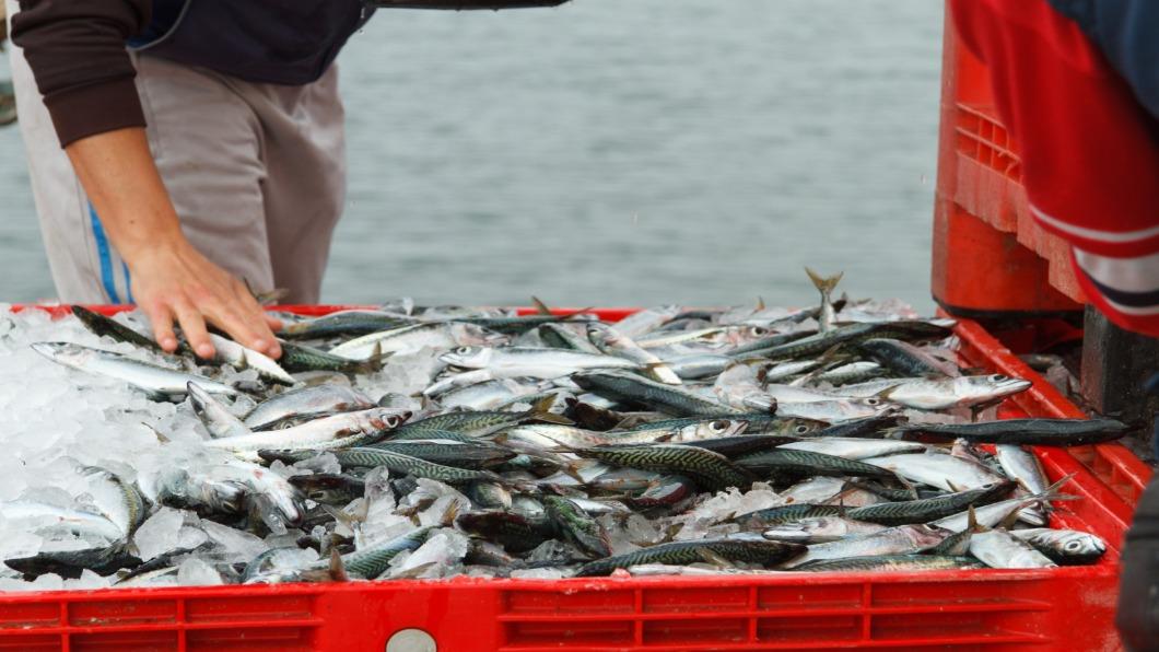 圖/達志影像 呷嘸當季貨!氣候變遷催日本「魚食文化」變