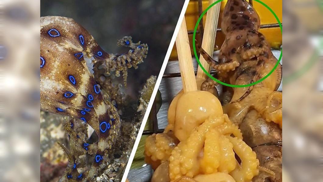 泰國夜市的燒烤攤,近日驚傳有攤販把含有劇毒的藍環章魚販售給遊客吃。(圖/翻攝自臉書) 燒烤攤賣藍環章魚 1隻可毒死26人比眼鏡蛇毒20倍