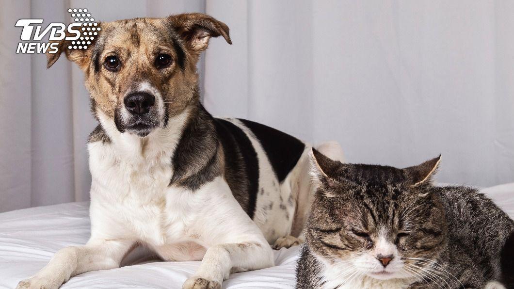 業者推買寵物附贈保險。(示意圖/shutterstock 達志影像) 毛小孩醫療開銷大 業界推買寵物附贈1年保險