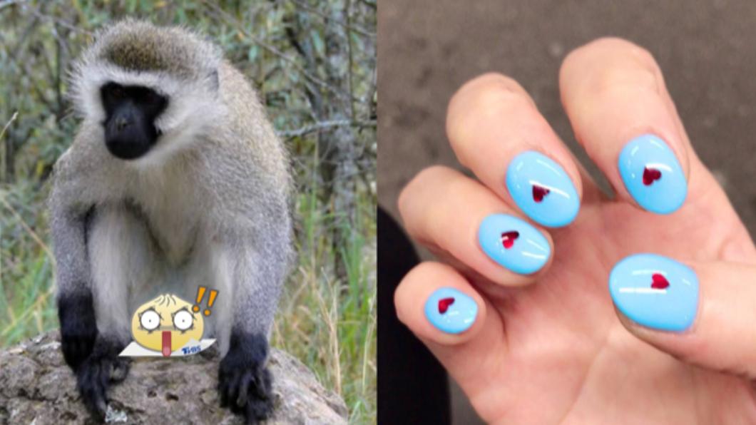 日本女子所做的美甲款式與公猴的生殖器如出一轍。(圖/翻攝自ひらうTwitter) 好尷尬!櫻花妹美甲撞款「公猴蛋蛋」眾人笑翻