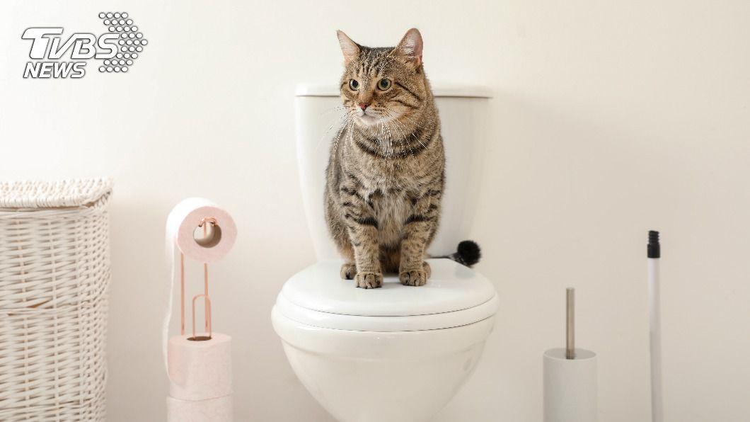 (示意圖/Shutterstock達志影像) 小王揪人妻度春宵 扯辯「家貓太臭」馬桶堵塞才上摩鐵