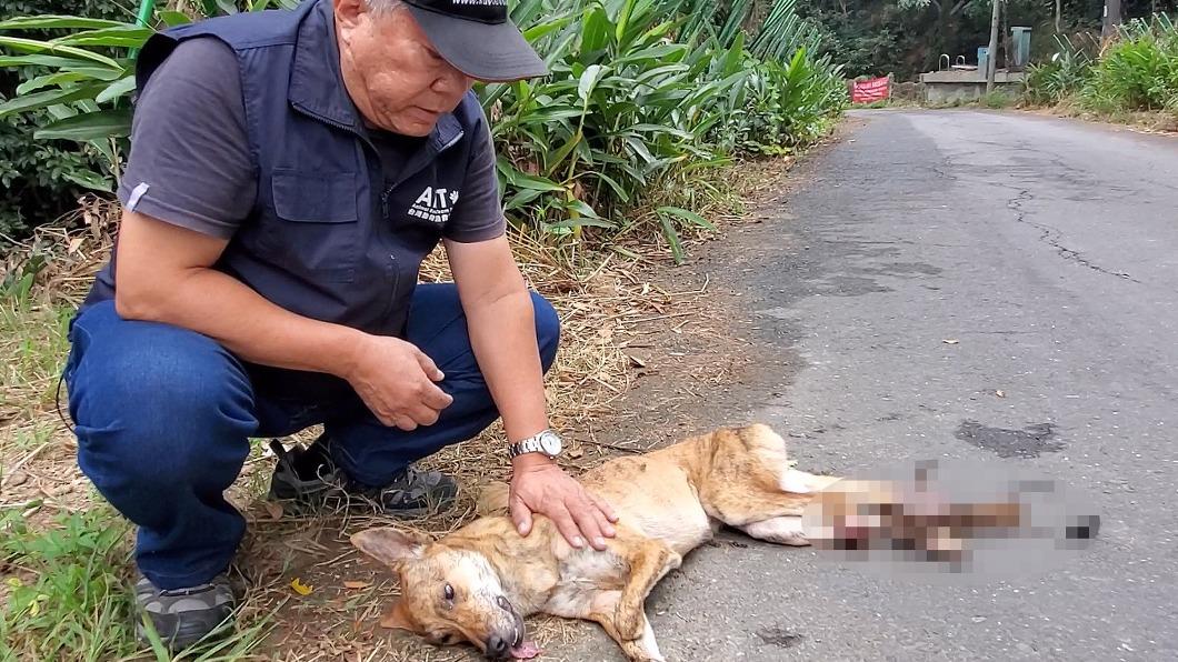 台灣動物緊急救援小組營救被捕獸夾夾傷的流浪犬。(圖/中央社) 六龜山區捕獸夾傷流浪犬 2犬流血白骨外露