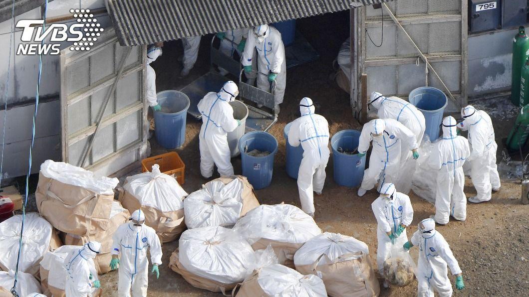 日本禽流感疫情持續擴散。(圖/達志影像路透社) 日本禽流感擴散 宮崎縣與香川縣2處養雞場中標