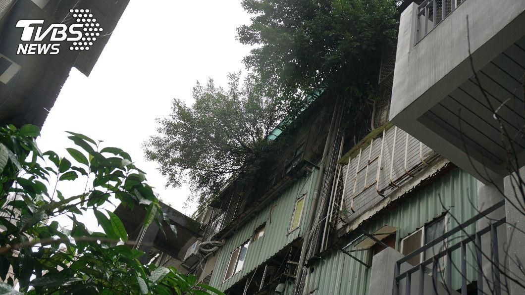 一棟舊公寓有住戶在頂樓設魚池,後陽台長小型榕樹。(圖/中央社) 北市公寓頂樓設魚池、陽台長樹 建管處:會現勘