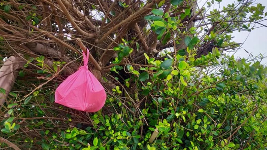 男子遇見有人正進行「死貓吊樹頭」的儀式。(圖/翻攝自「爆怨2公社」臉書) 私人土地樹上遭掛「塑膠袋」 地主打開驚見貓屍