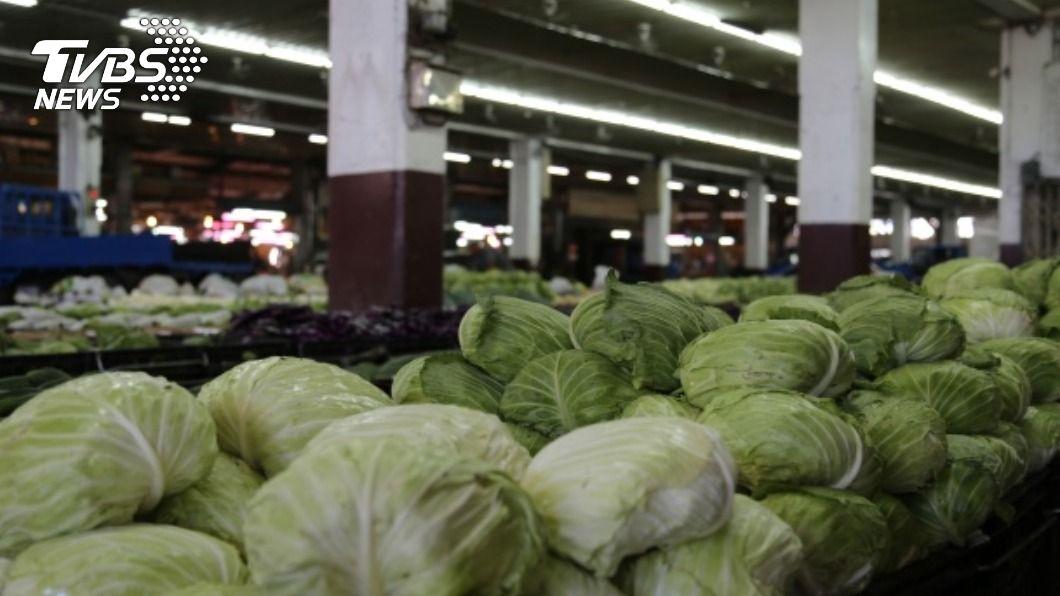 受寒流影響高麗菜價上漲。(圖/中央社資料照) 荷包減!台人天冷愛嗑鍋 高麗菜、茼蒿菜價狂飆