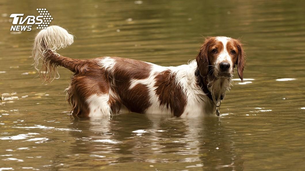 杭州一對夫妻未在規定時間內遛狗擔心挨罰,竟把愛犬丟入冰冷的河中落跑。(示意圖/shutterstock 達志影像) 違規遛狗怕挨罰 狠心大媽把毛孩丟入冰河落跑