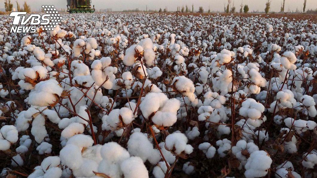 美國禁止所有新疆經營生產的棉花和番茄商品入境。(圖/達志影像路透社) 打擊強迫勞動 美禁止進口所有新疆棉花、番茄商品