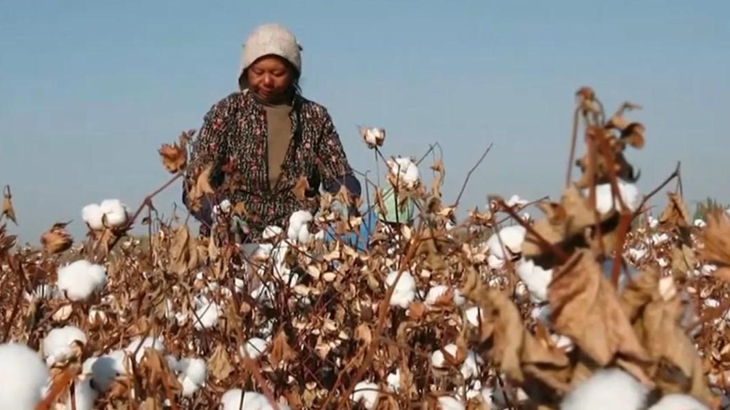 美英加打擊強迫勞動 禁進口新疆棉花.番茄