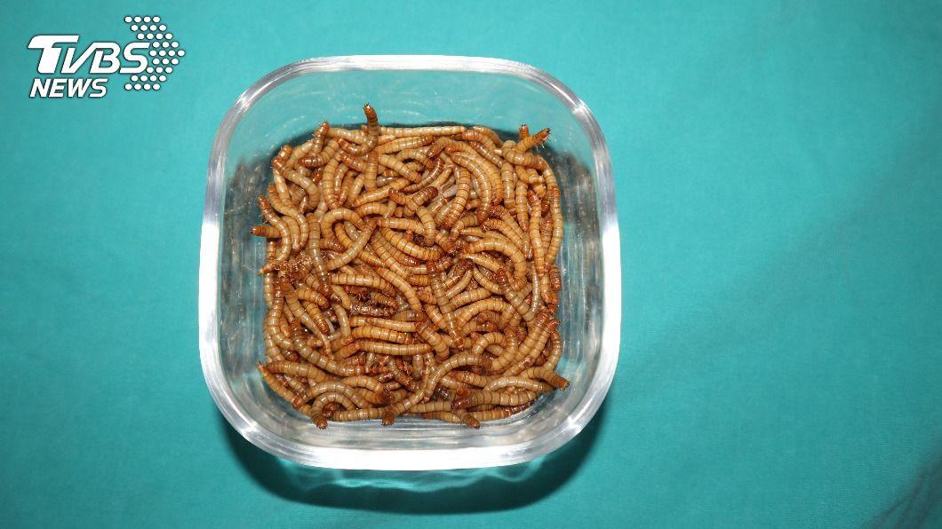 歐洲食品安全局對乾燥黃粉蟲發出安全許可。(示意圖/shutterstock達志影像) 歐洲食用昆蟲首開綠燈 食安局評估黃粉蟲可吃