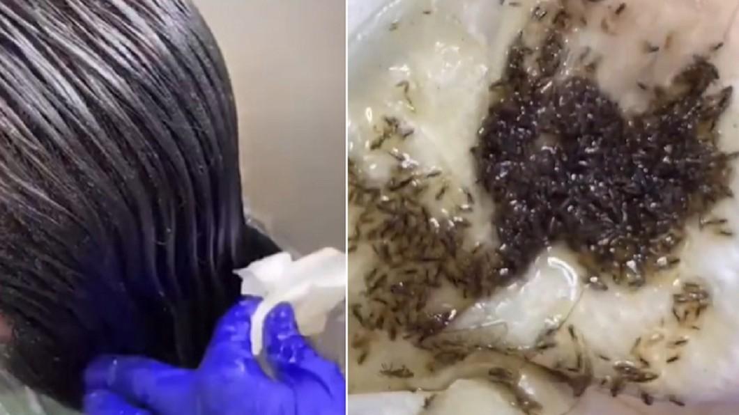 頭蝨多到猶如海苔醬。(圖/翻攝自Tiktok) 女長髮一梳「整坨頭蝨」海苔醬超濃稠 驚恐12秒全都錄