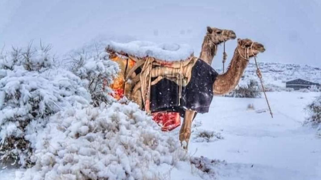 攝影師哈爾比捕捉到,駱駝身在一片銀白雪中的畫面。(圖/翻攝自「People Of Saudi Arabia」臉書) 奇景!駱駝披白紗 -3℃白雪籠罩撒哈拉沙漠