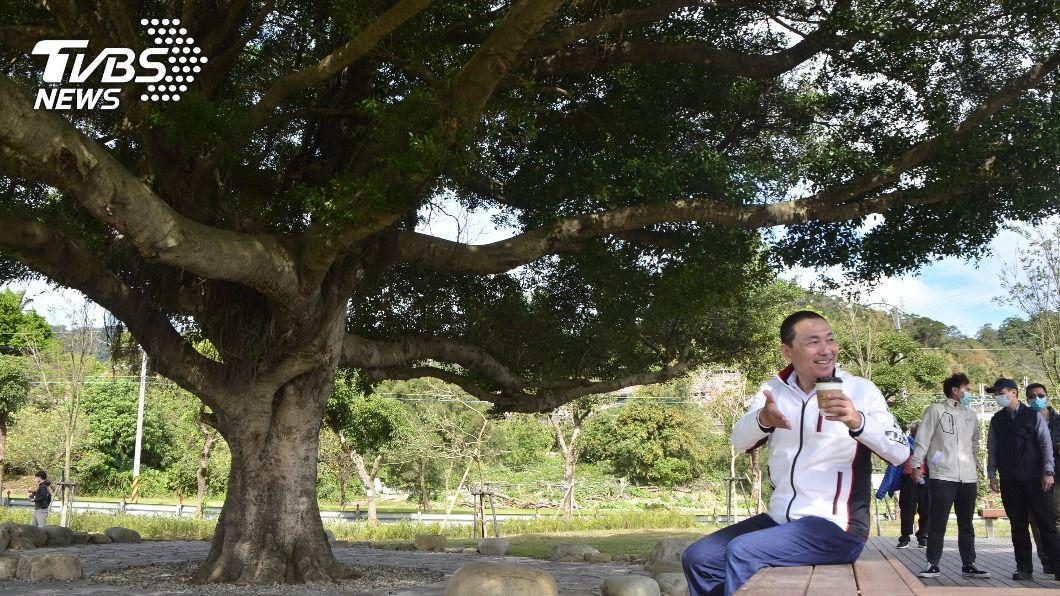 「沐心池」旁的百年榕樹成為地標。(圖/中央社) 樹林河濱公園沐心池開放 「新北金城武樹」作陪乘涼