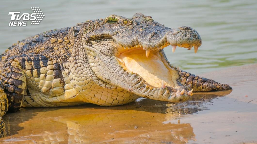 澳洲一名男子去湖邊游泳時,突遭鱷魚攻擊咬住頭部。(示意圖/shutterstock 達志影像) 游泳遭兇猛巨鱷魚咬頭 澳男「徒手扳開」奇蹟逃死