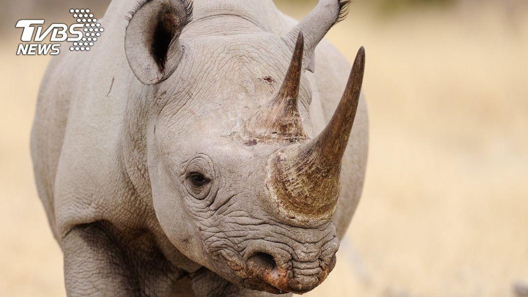 (示意圖/shutterstock 達志影像) 包裹藏63公斤犀牛角運往馬來西亞 南非海關破獲