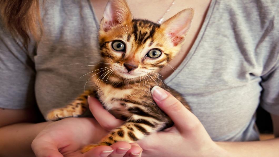 示意圖/達志影像 出現貓染疫! 南韓多地開放寵物貓.狗篩檢