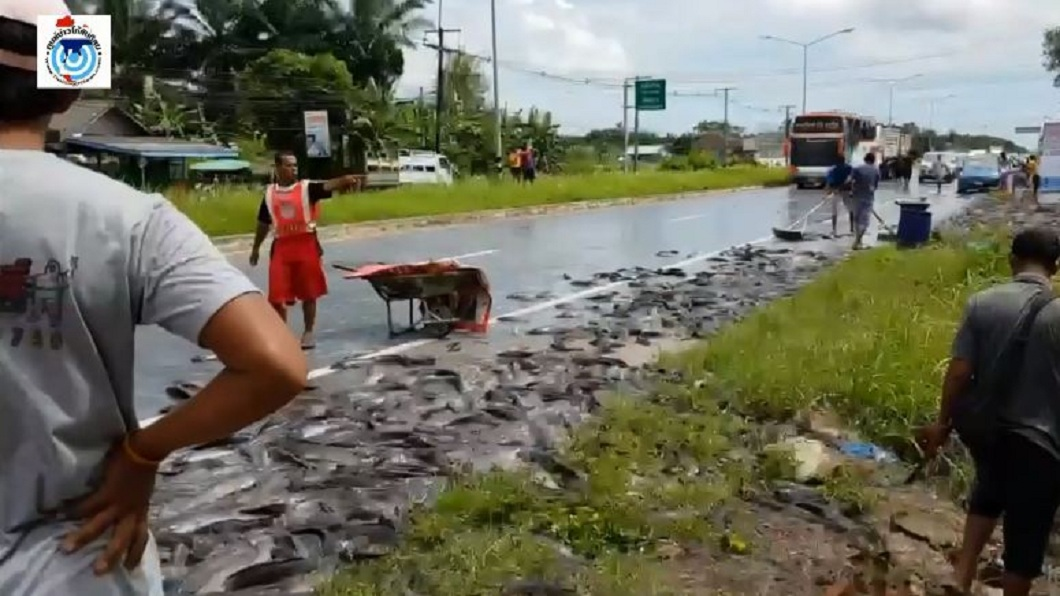 泰國日前發生一輛載滿活鯰魚的卡車翻覆,車上2噸的活魚全都散落在路面。(圖/翻攝自臉書粉絲團) 泰卡車突翻覆 2噸活鯰魚柏油路狂跳飄超臭腥味