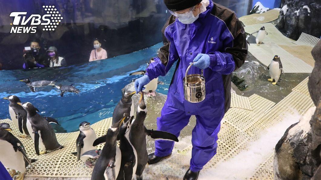 「我與企鵝的0.1毫米」活動場次都一開賣就完銷。(圖/中央社) 與企鵝親密接觸 屏東海生館有飼育體驗