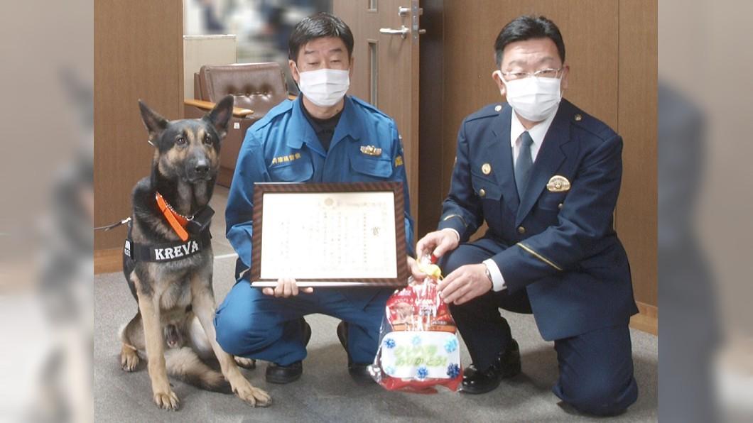 警犬「KREVA號」戴罪立功獲表揚。(圖/翻攝自Hyogo_Police推特) 日落跑警犬戴罪立功 速找回「失蹤嬤」光榮授獎