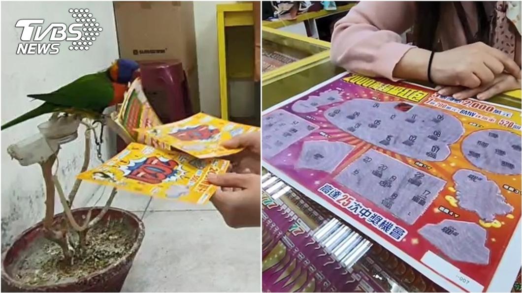 台東投注站鸚鵡幫婦人挑刮刮樂結果中1百萬。(圖/TVBS) 「神準七彩鸚鵡」 幫婦挑刮刮樂爽中1百萬