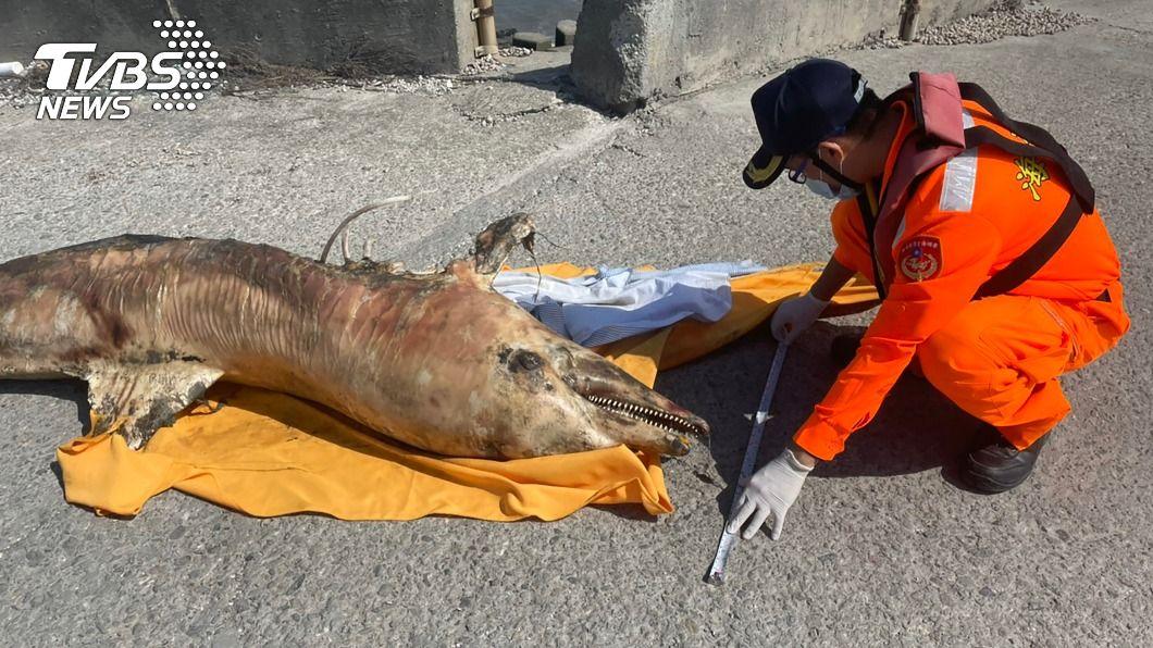 (圖/中央社) 彰化王功海岸4天2起鯨豚死亡 死因待釐清