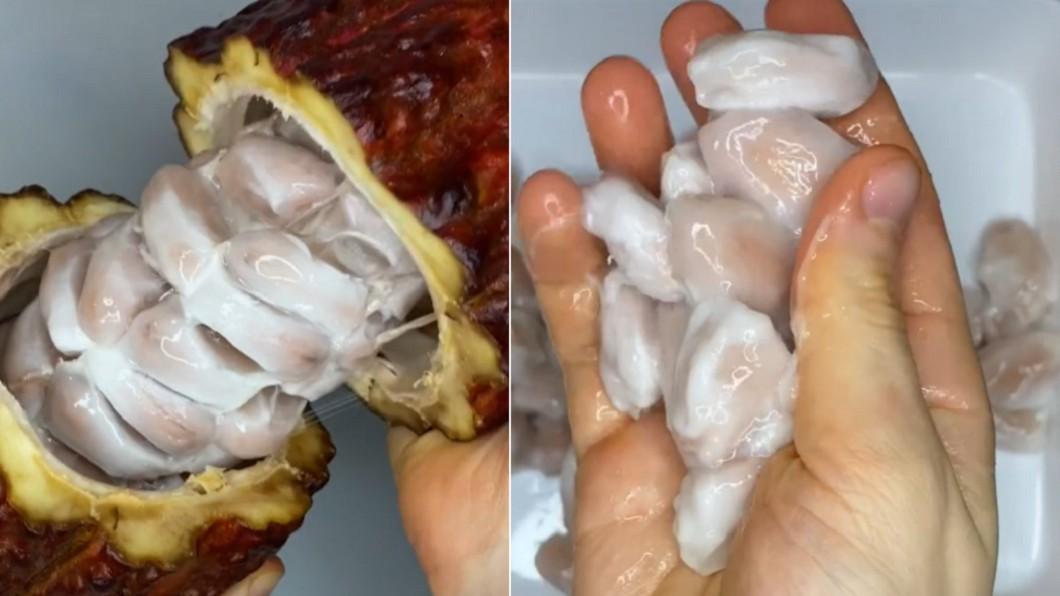 網紅揭開生可可豆的模樣。(合成圖/翻攝自sophiargreb TikTok) 烘製可可豆零食 剝開見「白色異形蟲」全場嚇歪
