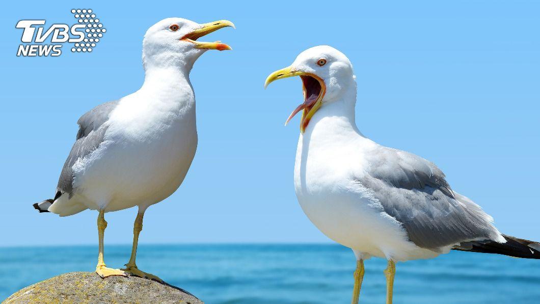 男子舌頭遭海鷗叼走。(示意圖/shutterstock達志影像) 英男街頭慘遭「強吻咬斷舌」 海鷗飛來叼走吃下肚