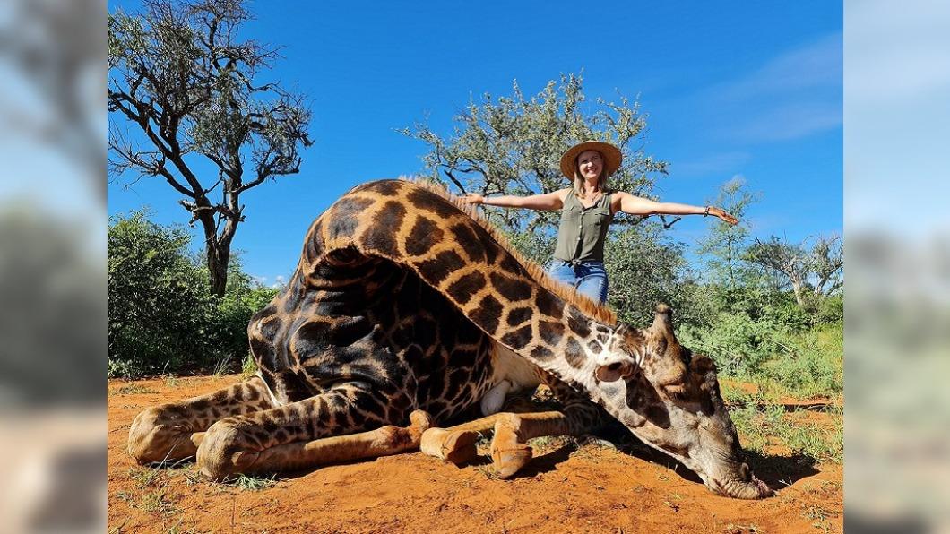 南非一名喜愛狩獵的人妻近日獵殺長頸鹿引發熱議。(圖/翻攝自Merelize van der Merwe臉書) 人妻獵殺長頸鹿「狠挖心臟」 鮮血淋漓殘忍影片曝