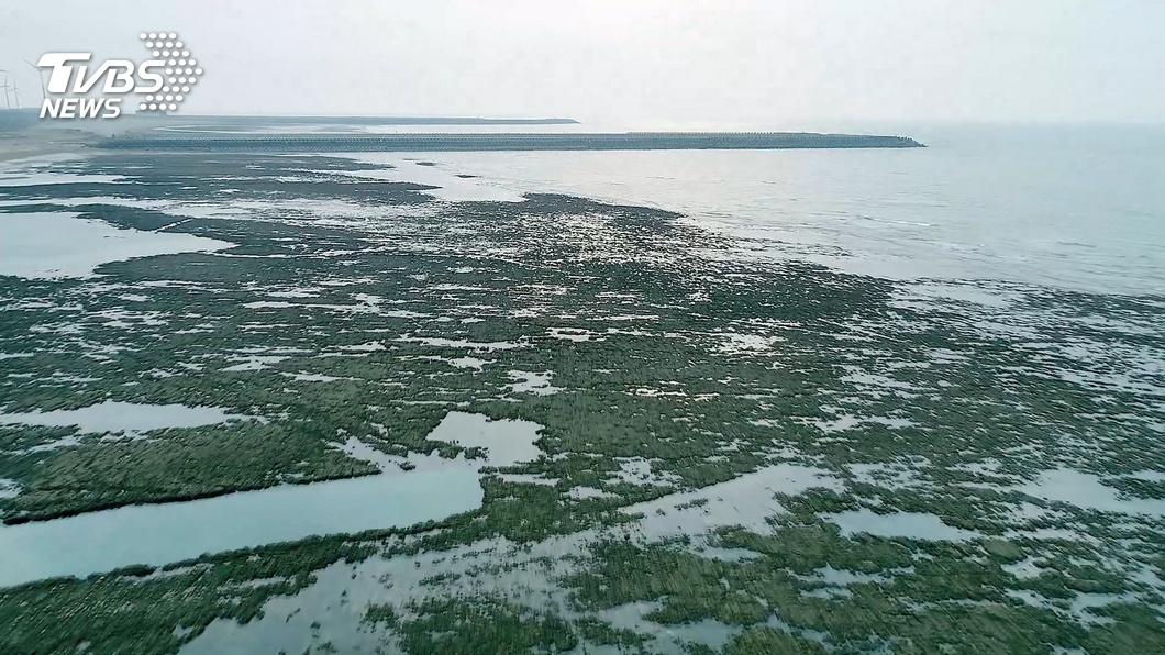 藻礁公投連署書繳交延期至3/10截止。(圖/TVBS) 藻礁公投連署延至3/10截止 目前尚缺11萬份