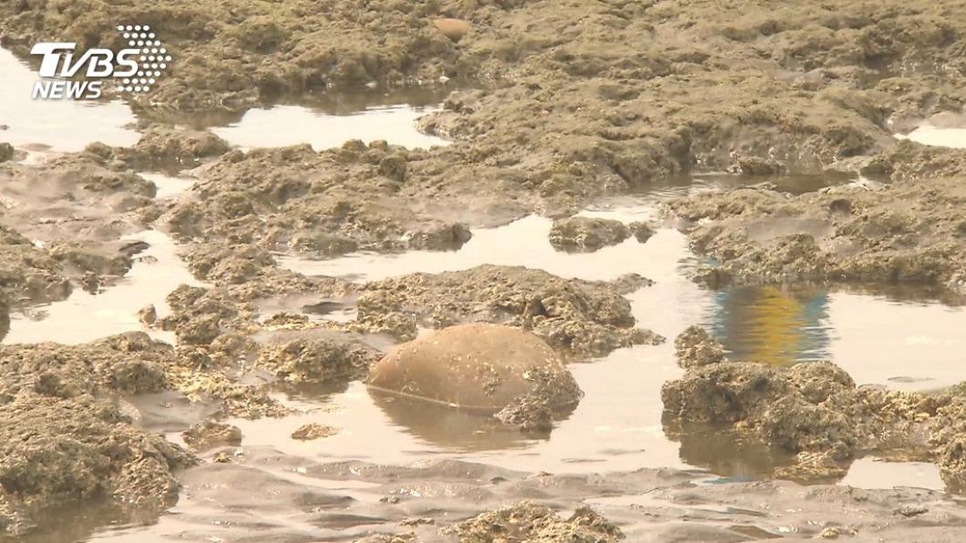 快訊/護藻礁連署衝破36萬 達安全門檻