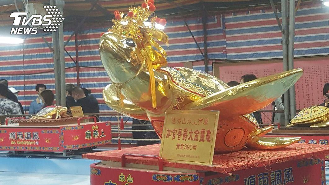 市值2500萬元的390兩黃金龜。(圖/中央社) 390兩市價逾2500萬!澎湖女婿擲筊抱回大金龜