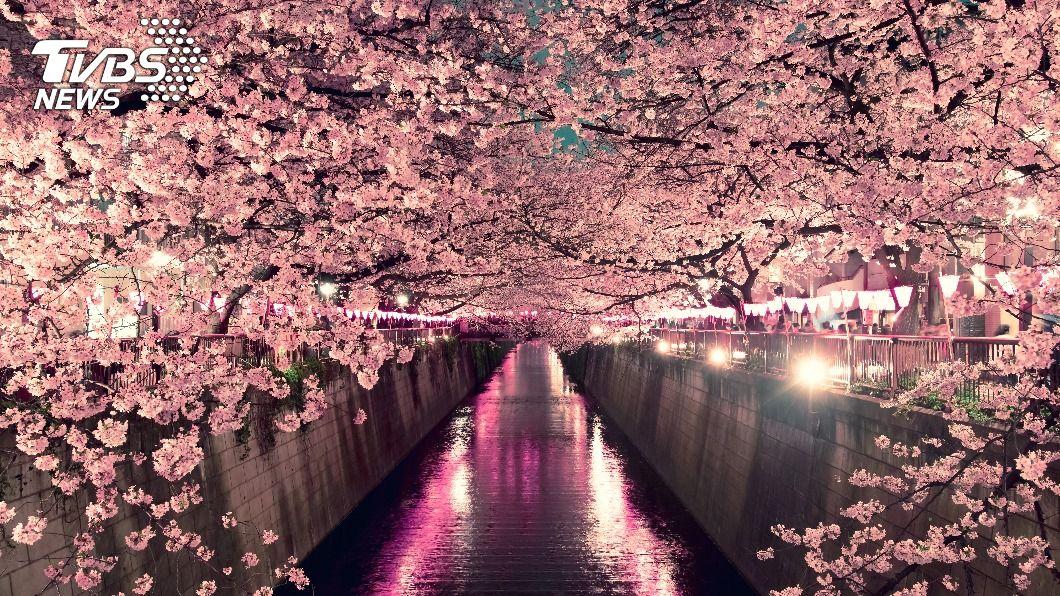 示意圖/shutterstock 達志影像 日櫻花即將滿開! 怕群聚可到飯店賞夜櫻