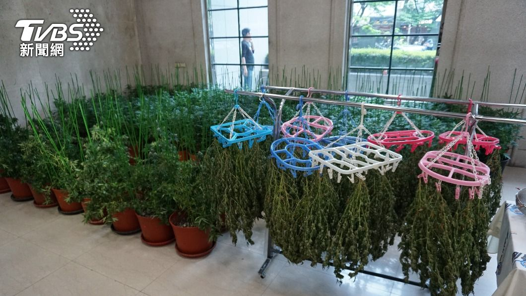 (圖/中央社) 男子租透天厝種90棵大麻遭逮 警方詢後送辦