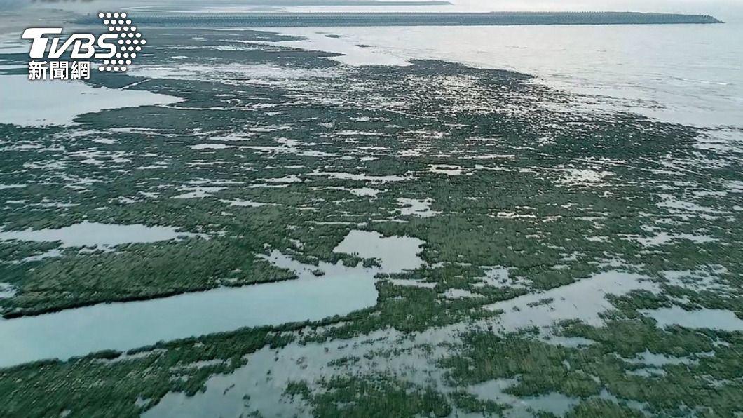 (圖/TVBS) 綠擬提對案反制? 蘇揆:藻礁公投是環保之間的抉擇