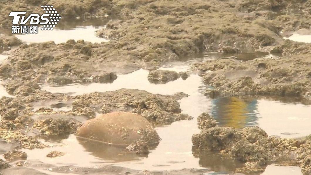(圖/TVBS) 學者:藻礁保護與三接非是非題 需更多判斷資料