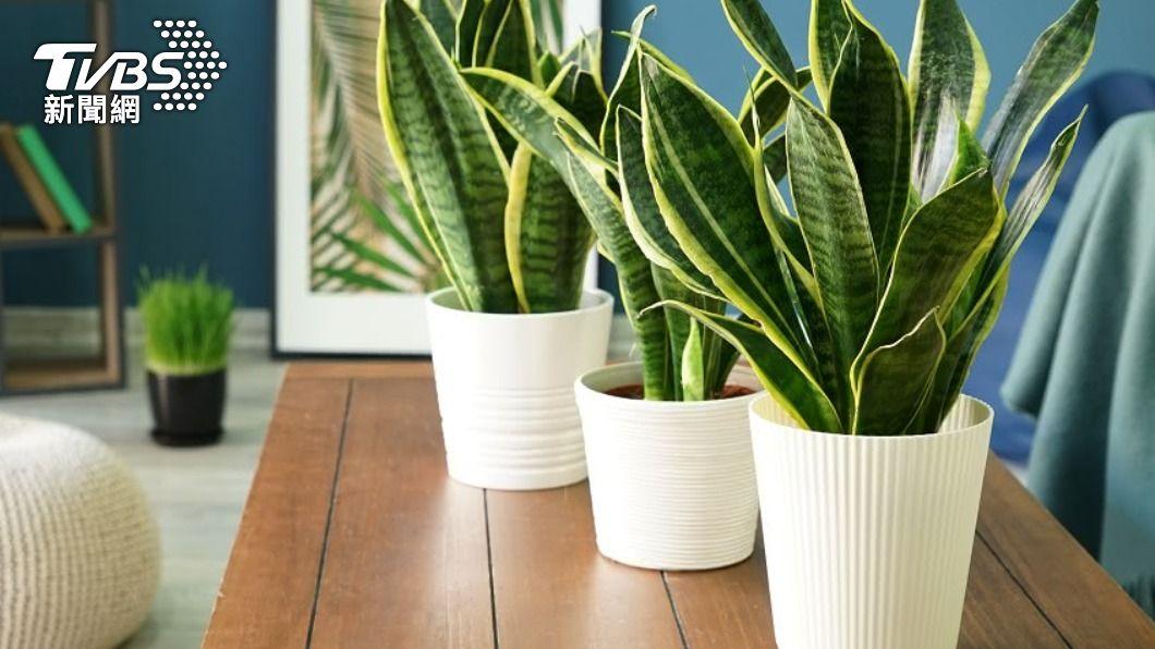 家中若擺設過多綠色植物,會室內充滿陰氣。(示意圖/Shutterstock達志影像) 居家風水5關鍵物擺多「恐招災禍」 錢財流失陰氣重