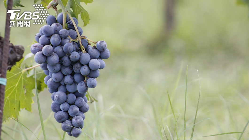 民眾顧著買鳳梨 「葡萄滯銷價跌」農民叫苦