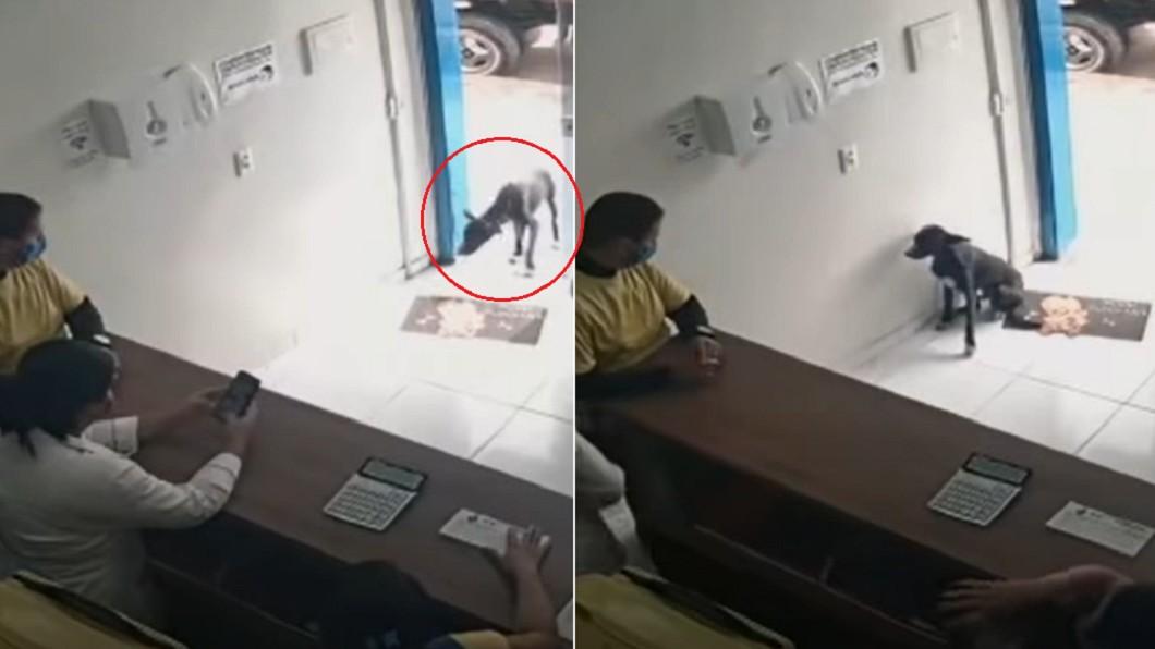 黑狗自行走近獸醫院引發關注。(合成圖/翻攝自 Stephen Messenger YouTube) 跛腳走到醫院 巴西浪浪「舉受傷前腳」掛號看病