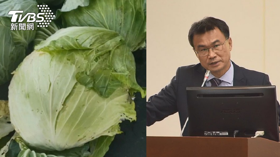 農委會被質疑收購補貼高麗菜的行為打臉自己。(圖/TVBS資料畫面) 曾問「哪裡產銷失衡」 她揪陳吉仲:收購補貼越花越多