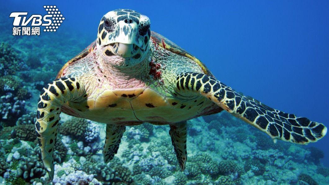 非洲居民在吃完海龜餐後,不幸中毒。(示意圖/shutterstock達志影像) 非洲34人大啖海龜餐集體中毒 慘釀19死含9名孩童