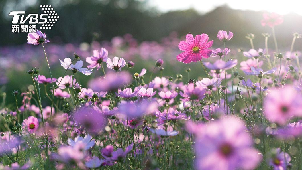今(20)日為4大節氣中的春分。(示意圖/shutterstock達志影像) 今「春分」遵守3開運秘訣 財運大漲桃花朵朵開
